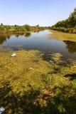 Kleiner sterbender Fluss wurde mit Sumpfpflanzen überwältigt Verschmutzung des umgebenden Straddle, schnelle Algenblüte Ökologisc stockfoto