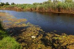 Kleiner sterbender Fluss wurde mit Sumpfpflanzen überwältigt Verschmutzung des umgebenden Straddle, schnelle Algenblüte Ökologisc stockbild