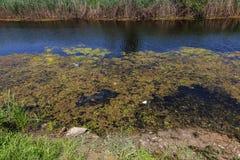 Kleiner sterbender Fluss wurde mit Sumpfpflanzen überwältigt Verschmutzung des umgebenden Straddle, schnelle Algenblüte Ökologisc stockfotografie