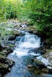 Kleiner Strom im Wald Stockbild
