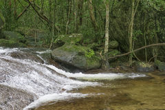 Kleiner Strom im Wald Stockfoto