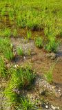 Kleiner Sumpf Stockbilder