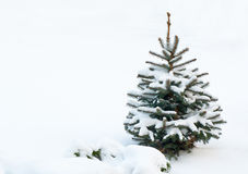 Kleiner Tannenbaum, bedeckt mit Schnee Stockbild