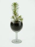 Kleiner Tannenbaum in einem Schnapsglas lizenzfreies stockbild