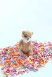 Kleiner Teddybär, der auf einem bunten Süßigkeitenbelag sitzt Weichzeichnung, heller Ton, Nahaufnahme Stockfoto