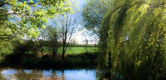 Kleiner Teich stockbild