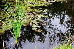 Kleiner Teich Lizenzfreie Stockfotografie