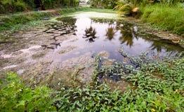 Kleiner Teich Lizenzfreies Stockfoto