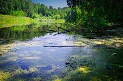 Kleiner Teich im Wald Lizenzfreie Stockfotos