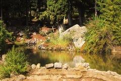 Kleiner Teich im Wald im Frühherbst lizenzfreie stockfotografie