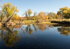 Kleiner Teich mit Bäumen und Feldern in den Fallfarben im Adirondacks Stockbilder