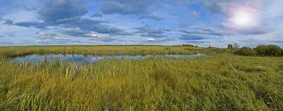 Kleiner Teich und Sumpf   Panorama Lizenzfreie Stockfotos