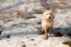 Kleiner Terrierhund auf dem Schnee Lizenzfreie Stockfotografie