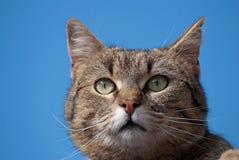 Kleiner Tiger Lizenzfreie Stockfotografie