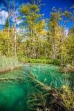 Kleiner transparenter See im Nationalpark Plitvice Lizenzfreies Stockfoto