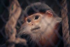 Kleiner trauriger Affe hinter dem Käfig Lizenzfreies Stockfoto