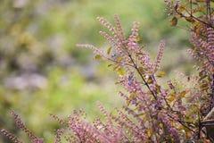 Kleiner violetter Blumengartenhintergrund Stockfoto