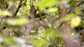 Kleiner Vogel stock footage