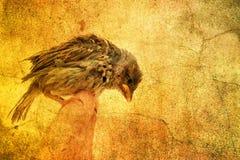 Kleiner Vogel Stockfotografie