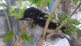 Kleiner Vogel Stockbild