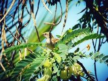 Kleiner Vogel Lizenzfreies Stockbild