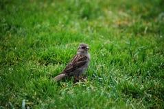 Kleiner Vogel-Abschluss oben stockfotografie