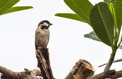 Kleiner Vogel auf dem Baum Stockfotos