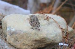 Kleiner Vogel auf dem Stein Stockbild