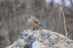 Kleiner Vogel auf dem Stein im Wald Stockfotos
