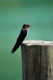 Kleiner Vogel auf einem Stumpf Stockfotografie