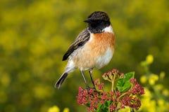 Kleiner Vogel auf einer dünnen Niederlassung Stockfoto