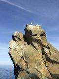 Kleiner Vogel auf Felsen durch Ozean Lizenzfreies Stockfoto