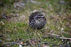 Kleiner Vogel auf Gras lizenzfreies stockbild