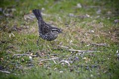 Kleiner Vogel auf Gras stockfotos