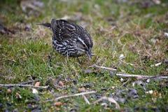 Kleiner Vogel auf Gras lizenzfreie stockbilder