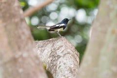 Kleiner Vogel auf Niederlassung Lizenzfreie Stockfotografie