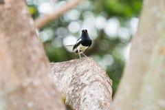 Kleiner Vogel auf Niederlassung Lizenzfreies Stockbild