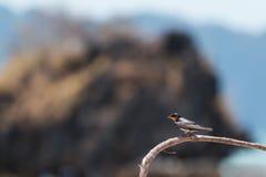 Kleiner Vogel auf Niederlassung Stockfotos