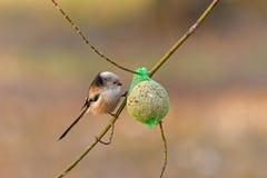 Kleiner Vogel auf Niederlassung des Baums Stockfoto