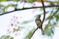 Kleiner Vogel auf Niederlassung im Park Stockfoto