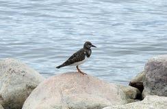 Kleiner Vogel auf Stein Lizenzfreie Stockfotografie