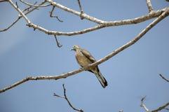 Kleiner Vogel auf Zweigbaum Lizenzfreie Stockfotos