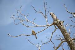 Kleiner Vogel auf Zweigbaum Stockfotografie