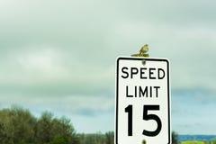 Kleiner Vogel Copyspace auf Zeichen lizenzfreies stockfoto