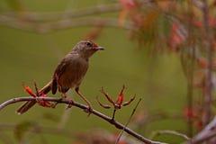 Kleiner Vogel, der auf einem Baum sitzt Lizenzfreie Stockfotos