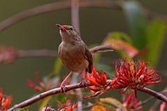 Kleiner Vogel, der auf einem Baum sitzt Stockfotografie