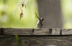 Kleiner Vogel, der ein Nest errichtet Stockbild