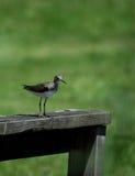 Kleiner Vogel, der für ein Porträt aufwirft Stockfotografie