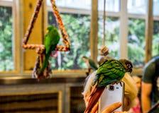 Kleiner Vogel des Papageien am Telefon Stockbild