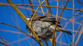 Kleiner Vogel in einem Baum stockfotografie